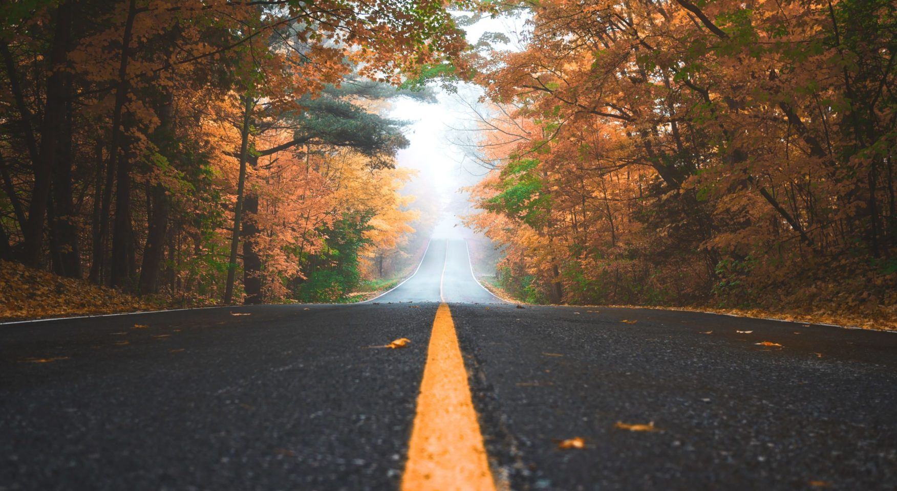 yellow line on road in autumn