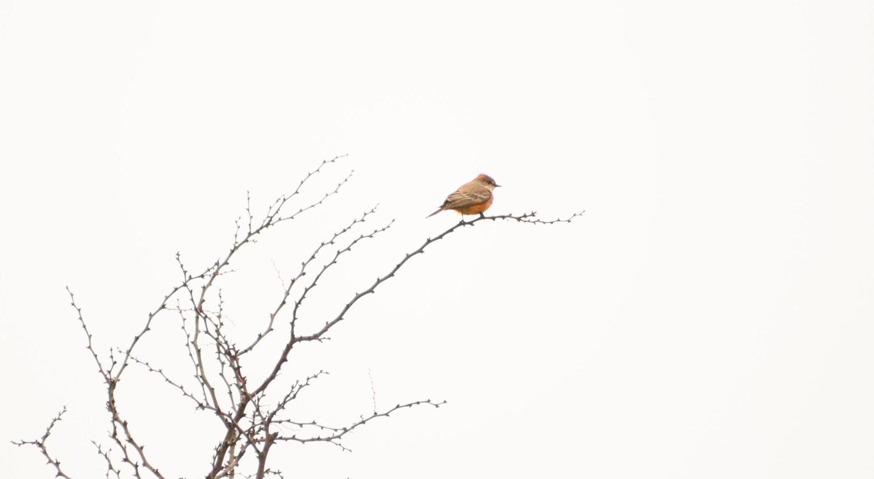 Lone bird in bare winter tree