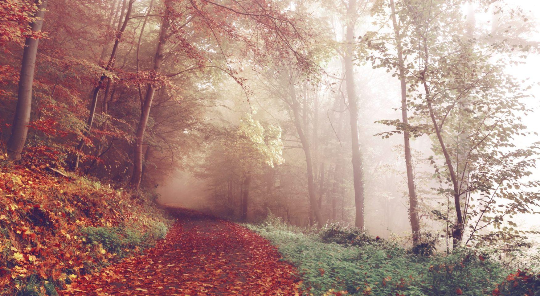 misty autumn mountain path