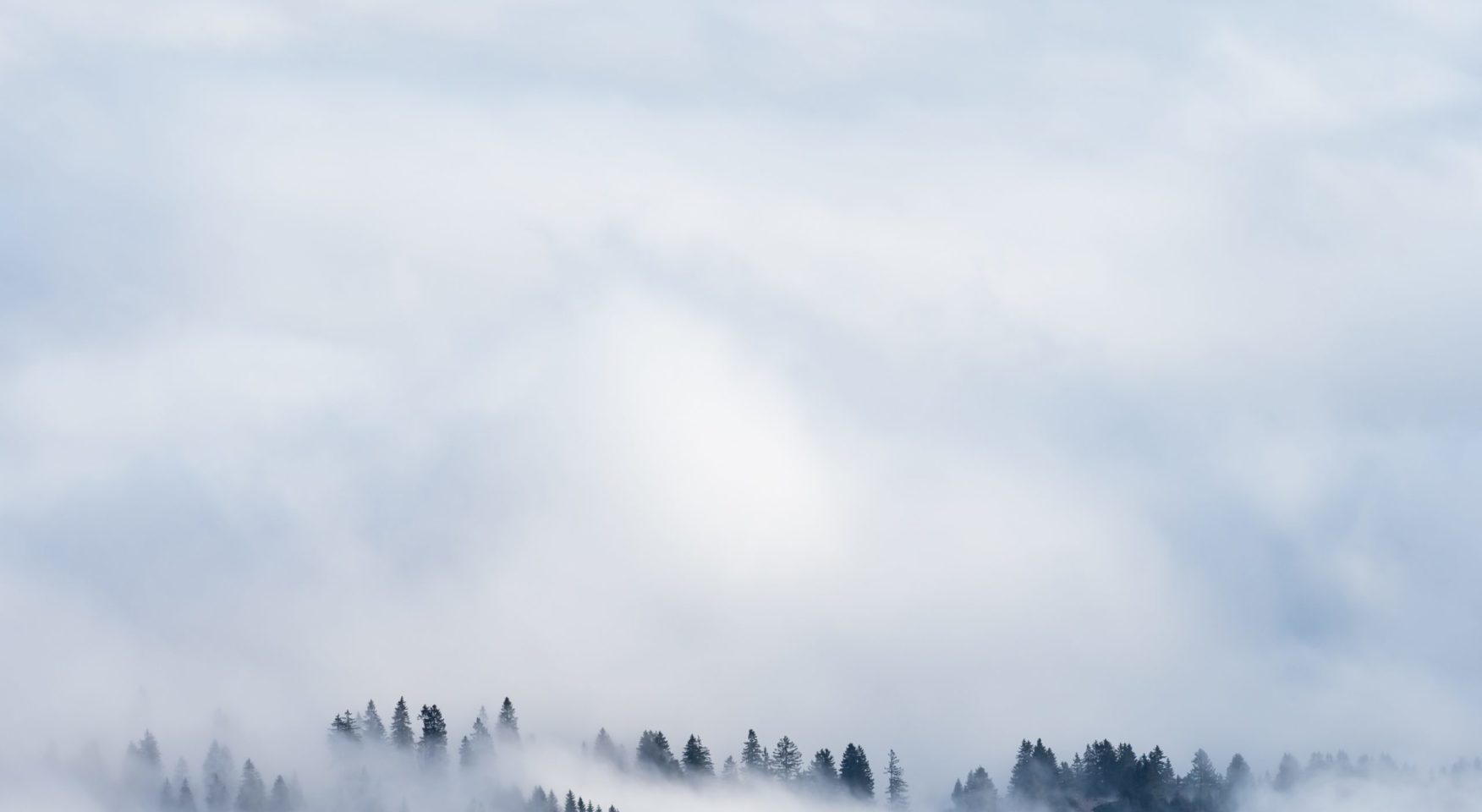 misty evergreen treetops