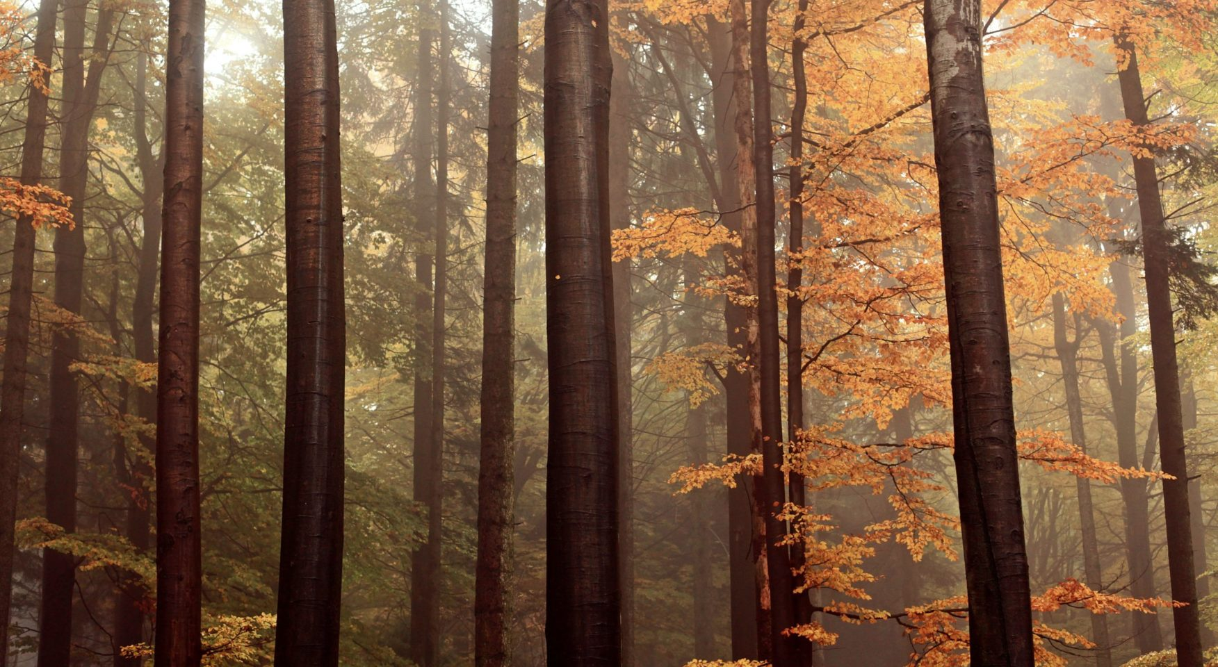 Orange leaves on tall trees