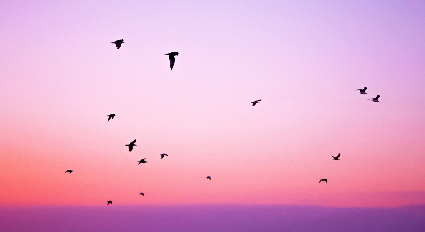purple pink sky with flying birds silhouette