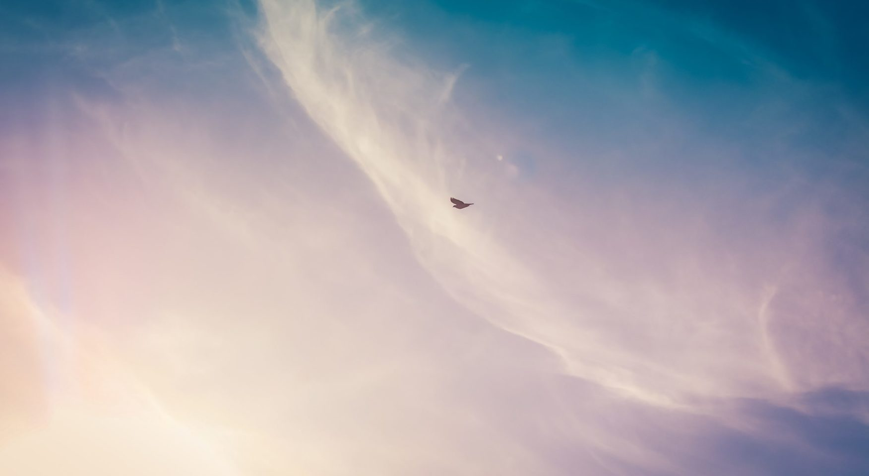 Single bird flying across a wispy sky