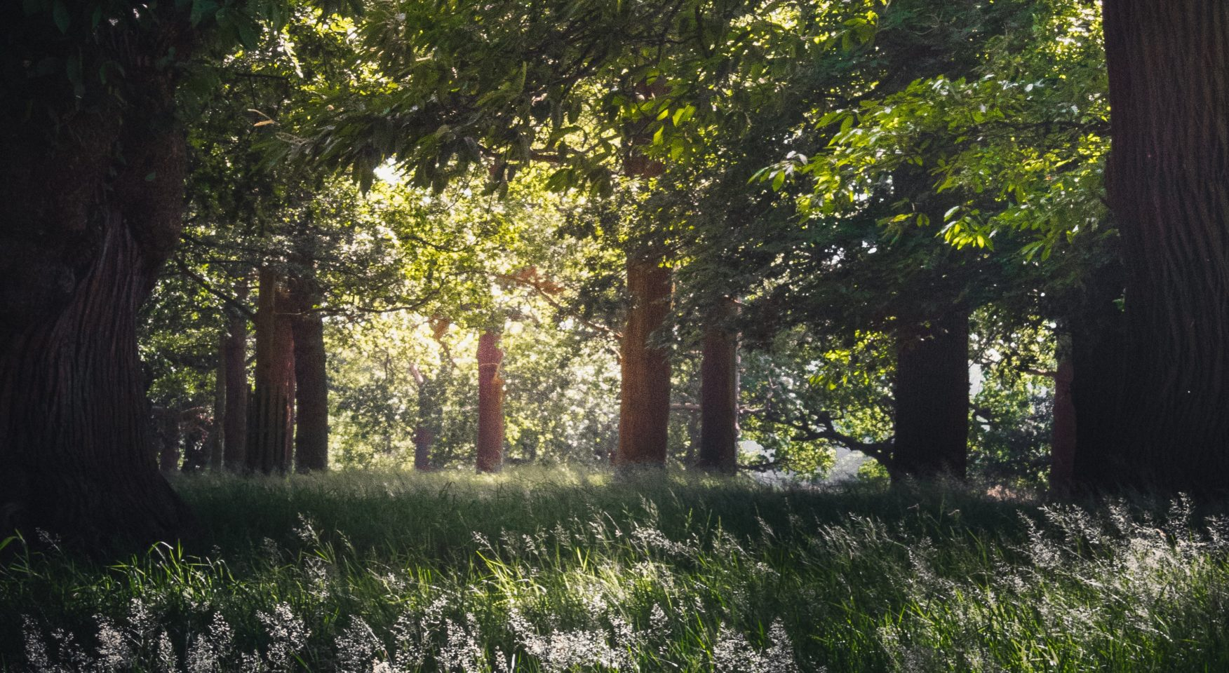 Forest and wild grass in summer light