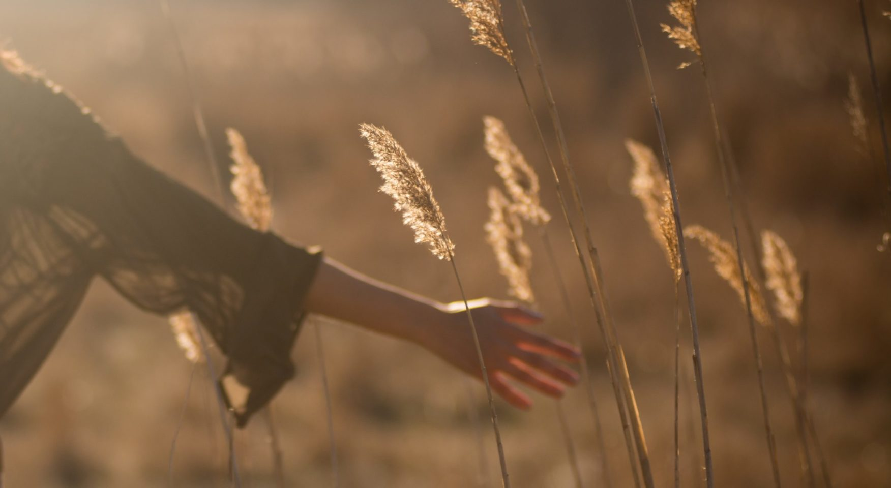Woman's hand touching wild grass in sunlight