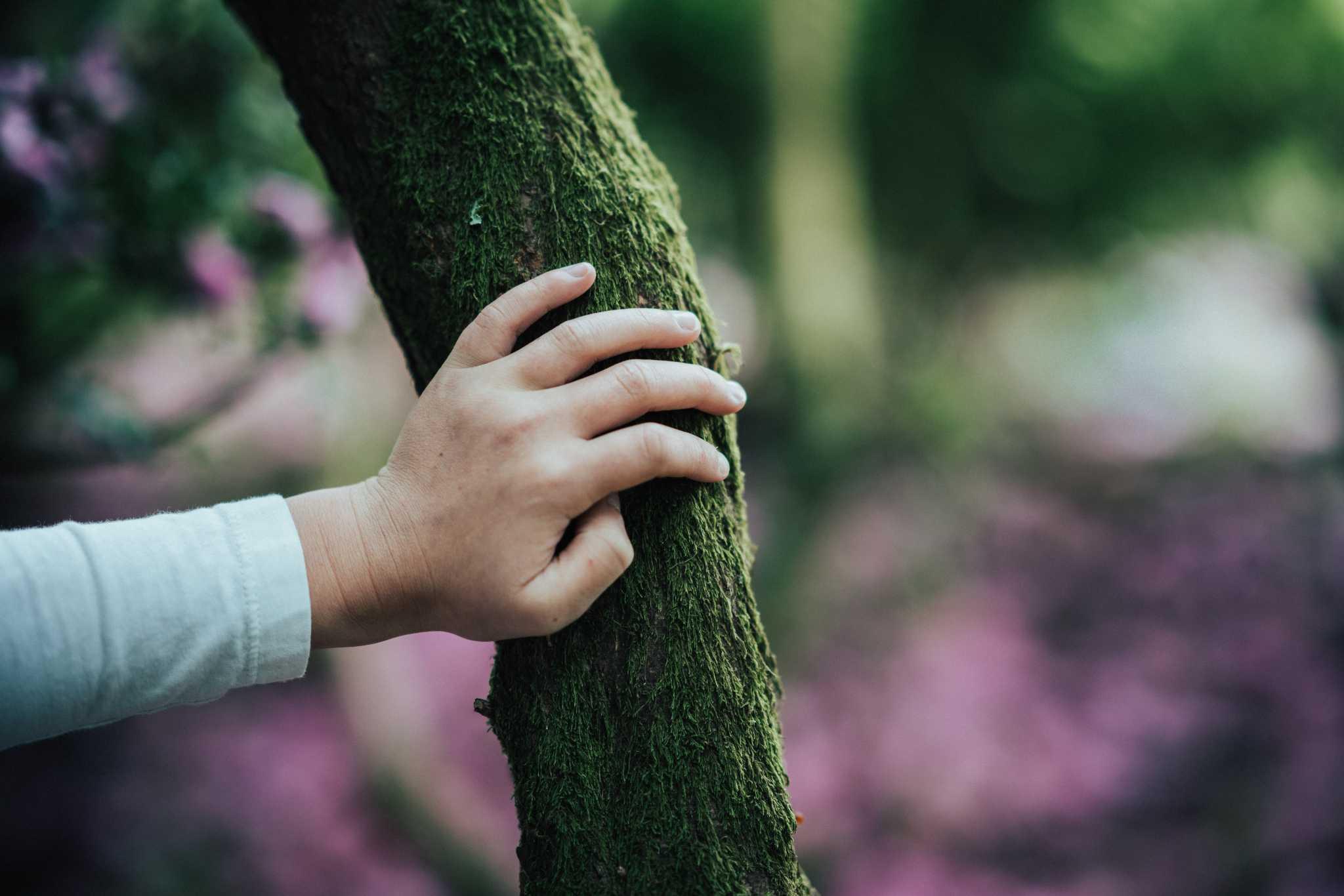 hand touching mossy tree